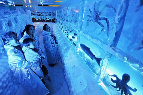 Frozen fish aquarium in Japan